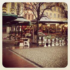 2. Plac Solny || kwiaciarnie