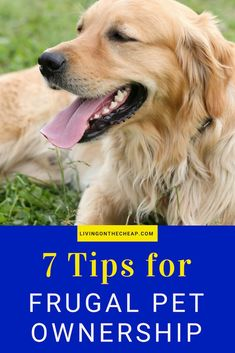 Do you have a pet? To help you take a frugal approach to taking care of Fido or Fluffy, here are my 7 tips for frugal pet ownership. Frugal Living Tips, Frugal Tips, Cheap Pets, Money Saving Meals, Veterinary Care, Pet Insurance, Dog Hacks, Pet Care, Puppy Care