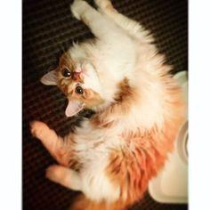 ○ ストーブに近づきすぎの図 ・ ・ #cat #love #photo #neco #snap #cute #girl #momo #Kittycat #hot #animal #lovely #photography #momo_snap #vsco #vscoworld #vscocam #猫 #愛猫 #猫好き #もも #ねこ #女の子 #ねこすたぐらむ  #ねこ部 #ねこ好き #ねこラブ #ねこのいる暮らし  #ねこずきさんと繋がりたい