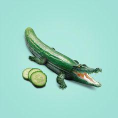 Cucumber crocodile @mherlou