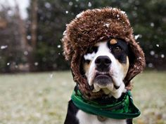 Dog wearing hat - kelly patterson photography/Getty Images