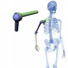 ▶ Anatomie, Teil3 - Kugelgelenk - YouTube