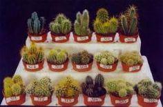 Определитель Голландских кактусов | Планета кактусов