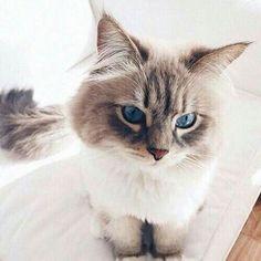 Cute & Cats