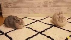 Cute Little Animals, Cute Funny Animals, Funny Cute, Baby Bunnies, Cute Bunny, Pet Bunny Rabbits, Cute Animal Videos, Cute Creatures, Animals And Pets