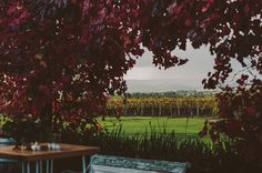 The view from The Barn at Stones of the Yarra Valley