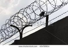 Image result for barbed wire fence prison
