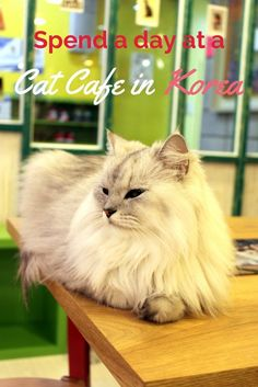 Spend a day at a cat cafe in Korea! There are a bunch around Seoul and Busan where you can play with adorable kitties