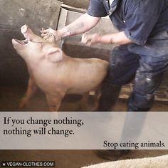 Be the change. #GoVegan