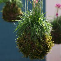 Quand les plantes quittent leur pot, elles se transforment en sculptures végétales poétiques pour l'intérieur ou l'extérieur. Découvrez l'art nippon du kokedama, beaucoup moins délicats ...