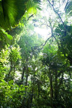 Rainforest Canopy Provides Shade