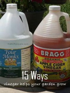 15 ways to use vinegar in the garden