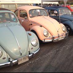 Pastel blue and pale pink VW Beetles