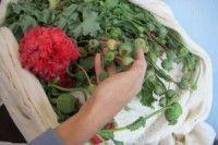 Полицейские Курчатова у местного жителя выявили наркосодержащие растения