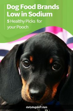 Homemade Dog Cookies, Homemade Dog Food, Dog Biscuit Recipes, Dog Food Recipes, Best Dog Food, Best Dogs, Dog Nutrition, Dog Food Brands, Dog Diet