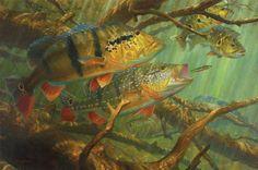 Amazon Ambush | Artists for Conservation- Mark Susino- my favorite fish artist- he's pretty darn great.