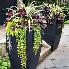 Spider plants, wandering Jew, creeping Jenny, Sweet potato vine in planter pots. Black container makes the creeping Jenny pop. Jardiniere Design, Front Porch Flowers, Summer Front Porches, Backyard Planters, Potted Plants Patio, Front Porch Planters, Outdoor Potted Plants, Deck Plants Ideas, Outside Planters