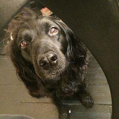 Instagram photo by @faust_in (Faust'in (33) | Moma, la chienne de mon coiffeur qui pose pour l'opération #perlenoire ! Vous avez un animal noir ? Vous aimez les selfies ? Alors allez lire mon article du jour sur le blog, c'est pour la bonne cause :  www.faust-in.com emojiemoji