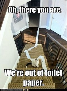 Funny Animal Pictures Of The Day - 24 Pics The joys of being a cat parent. Yup, it's the toilet paper again. ....
