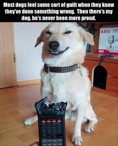 If you have pets at home, you will surely love these hilarious & Funniest animals memes that will make laugh you hard . loL 😀 :p So here are some the best I would say trending funny animal memes, i … Continued Funny Dog Memes, Funny Animal Memes, Cute Funny Animals, Funny Animal Pictures, Cute Baby Animals, Funny Cute, Funny Dogs, Cute Dogs, Memes Humor