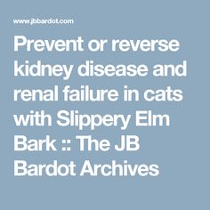 Prevent or reverse kidney disease and renal failure in cats with Slippery Elm Bark :: The JB Bardot Archives