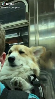 so cute Aww…. so cute,Animals Cutest dogs video Cute Funny Animals, Cute Baby Animals, Animals And Pets, Funny Dog Videos, Funny Dogs, Pet Videos, Corgi Videos, Corgi Dog, Dog Cat