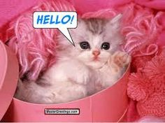 Image detail for -Pink Cat Wallpaper Cute Kitten Gif, Cute Cats And Dogs, Little Kittens, Cute Cats And Kittens, I Love Cats, Kittens Cutest, Baby Animals, Cute Animals, Funny Animals