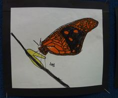 Monarch Butterflies Felt Pen and Wax Crayon Year 2