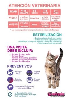 Veterinary Care Infographics in Cats Pets 3, Pet Dogs, Dog Cat, Veterinary Care, Diy Stuffed Animals, Cat Toys, Pet Shop, Cat Life, Dog Grooming
