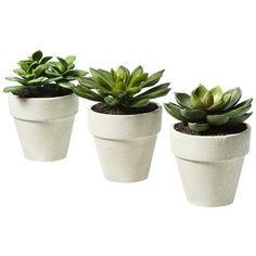 succulent pots modern - Google Search
