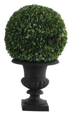 Natural Decorations, Inc. - Boxwood Natural Preserved, Cast Iron Urn Black