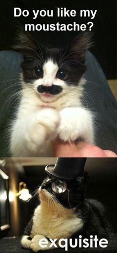 My next door neighbor had a cat that had a mustache like this one only it was more square on the sides and his name was Hitler. Soooo cute I want one!