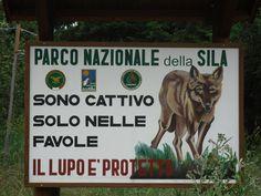 Parco Nazionale della Sila: il lupo