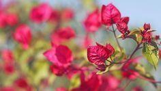Flowers by Vikramdeep Sidhu on 500px