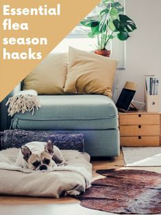 These 10 elements of a cozy home will give you a variety of warm and cozy living room ideas. Learn how to make your living more cozy and inviting! Tips for a higgle lifestyle. Get the fall higgle aesthetic going with these tricks.