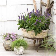 This summer, we're thinking about simple plant groupings for a low-maintance mix of texture and color. Three of our favorites? Phlox subulata, Carex, and Salvia.