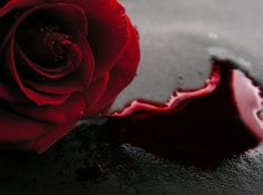 Cynthia Mist wears the Forever Rose. Preserved with her vampire blood.  It is the Forever Rose in her hair.  A rose that will never fade, nor fall apart.  A blood red rose that will last forever.