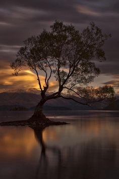 Lone Tree of Lake Wanaka ~ New Zealand