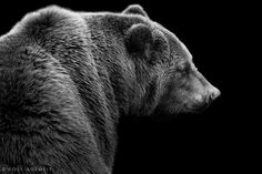 KAMTSCHATKA BEAR by Wolf Ademeit, via 500px  This is a gorgeous photograph
