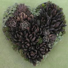 succulent heart...perfect for texas weddings