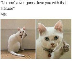 Check out these Funny Animals Memes which are funny and cute at the same time. These animal memes are trending all over the internet. Seriously Funny, Really Funny Memes, Funny Animal Memes, Stupid Funny Memes, Cute Funny Animals, Funny Relatable Memes, Funny Cute, Funny Shit, Funniest Memes