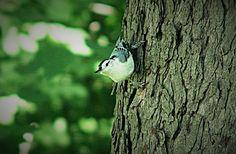 NATURE! Bird, Nature, Animals, Animaux, Birds, Animal, Animales, Nature Illustration, Off Grid