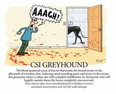 CSI greyhound, by Richard Skipworth