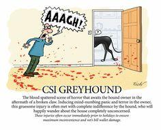 CSI greyhound, by Richard Skipworth