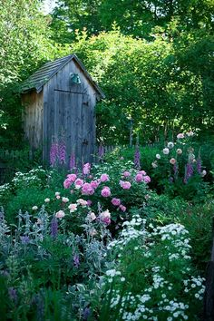 Garden Whimsy Cottage Garden Inspiration- pink roses, white daisies, lamb's ears, larkspurs, salvia