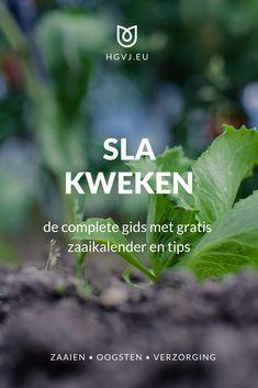 De snelle gids voor sla kweken in de volle grond, kas en potten. Met stappenplan voor: zaaien, oogsten en verzorging. Met uitgebreide zaaikalender.