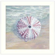 JAN227 712W Sea Urchin