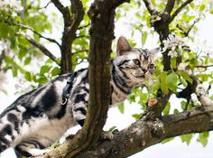 Twigs, the cat, in a tree   //    FOXINTHEPINE.COM