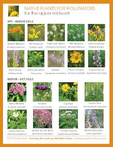 Native Plants for Pollinators
