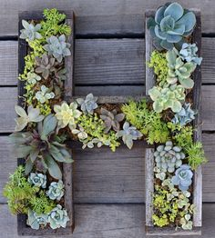 How To Make Wall-Mounted Art With Succulent Letters...http://homestead-and-survival.com/how-to-make-wall-mounted-art-with-succulent-letters/